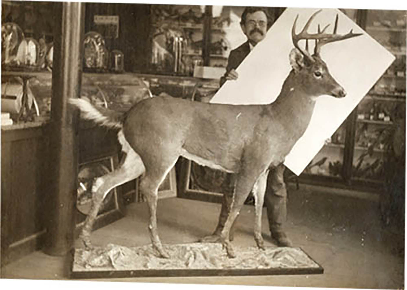 Taxidermie-Chester-400